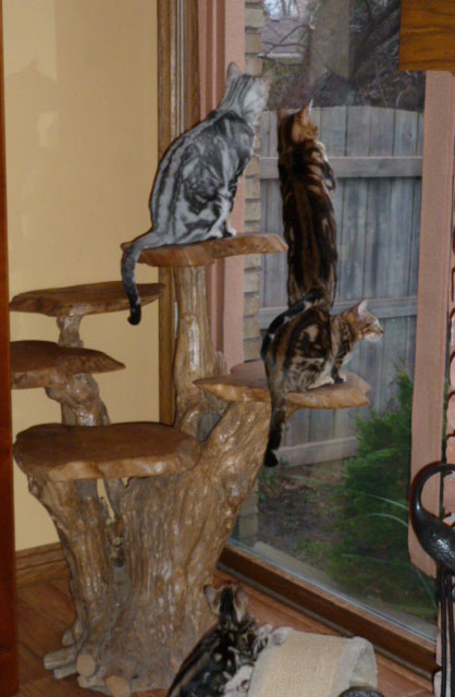 Cool Kitty Tree...